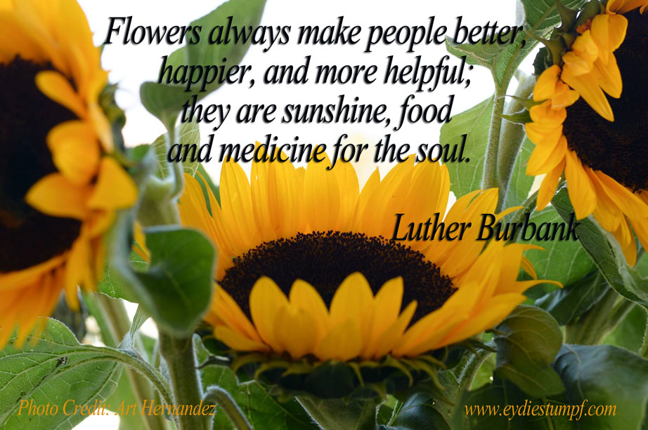 Flowers always make people better, happier, and more helpful; they are sunshine, food and medicine for the soul. Luther Burbank
